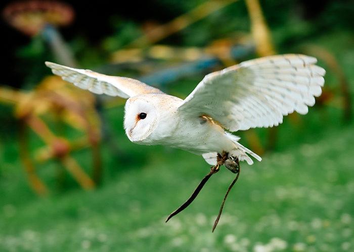Our Flying Team | Coda Falconry