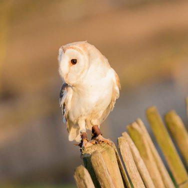 owl-encounter-600x600