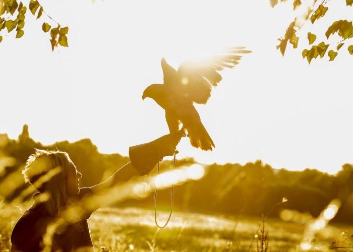 bird_returning_to_handler